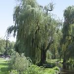 Cedar Creek Park  (405)