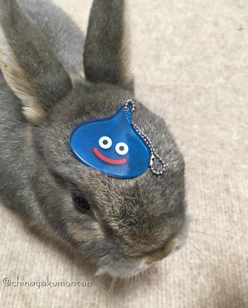 スライムがあらわれた! A Slime draws near!🐰 #うさぎ #うさぎのもんたん #rabbit #bunny #もふもふ #ペット #pet #love #cute #fluffy #instagood #followme #kawaii #squareenix #lapin #ふわもこ部 #動物 #instabunny #coniglio #petphotography #animallovers #kaninchen #cuniculus #conejo #兎子 #ドラク
