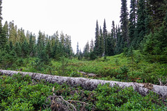 Mount_Rainier_National_Park-3.jpg