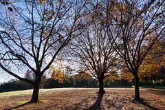Monrning Sun Through the Trees by Vasona Lake