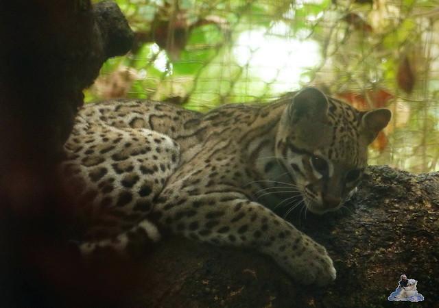 Belize Zoo 19.11.2014 70