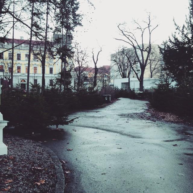 Winterwunderland ist's noch keines, aber ein Wäldchen im Stadtpark hat auch was... © diekremserin