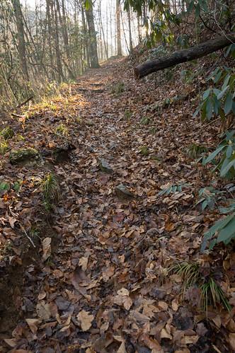 Coldspring Branch Trail uphill - 2