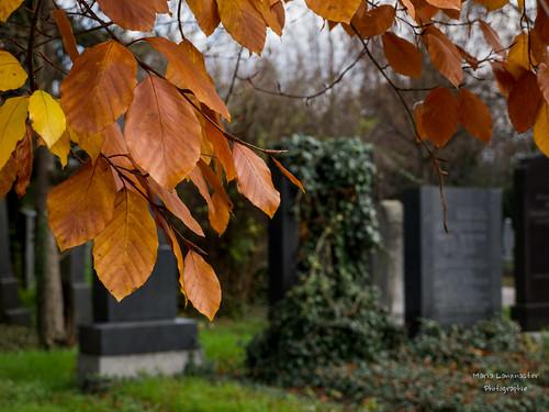 Herbst am Zentralfriedhof