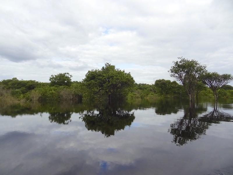 manaus-rio negro-amazon 93