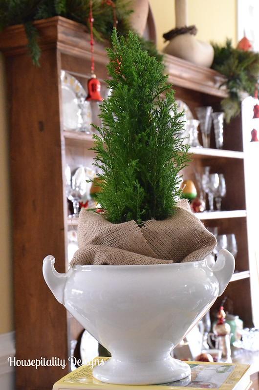 Cedar tree in vintage ironstone tureen-Housepitality Designs
