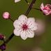 Blossom Time by azcangal