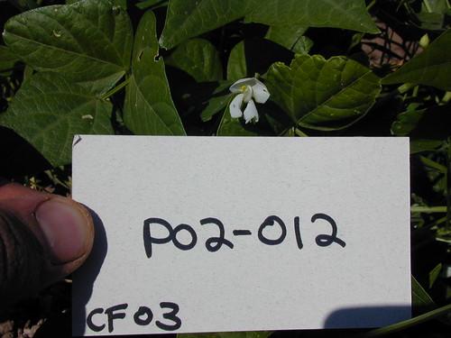 P02-012 CF03 Fl