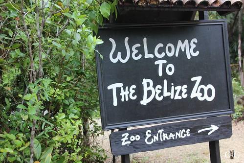 Zoo Karibikinsel Belize 19.11.2014 4