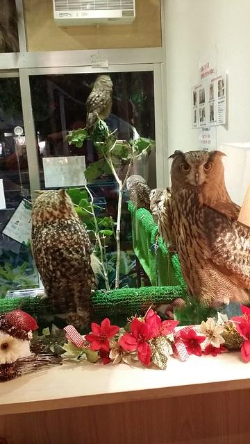 kiba owl cafe 1