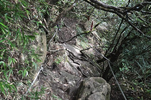 加里山-杜鵑嶺步道