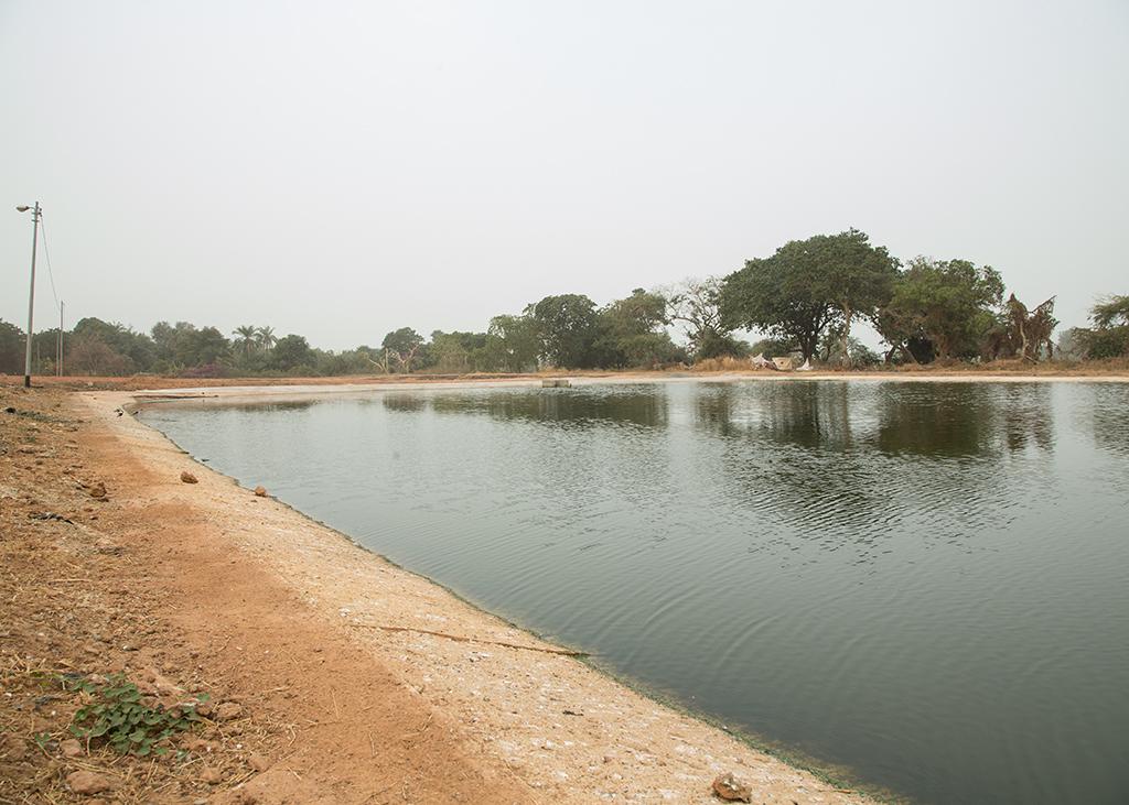 Sewerage ponds Kotu,Gambia