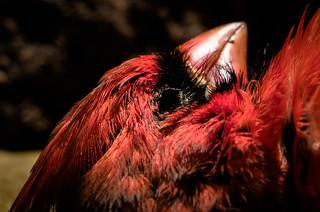 Death of a Cardinal
