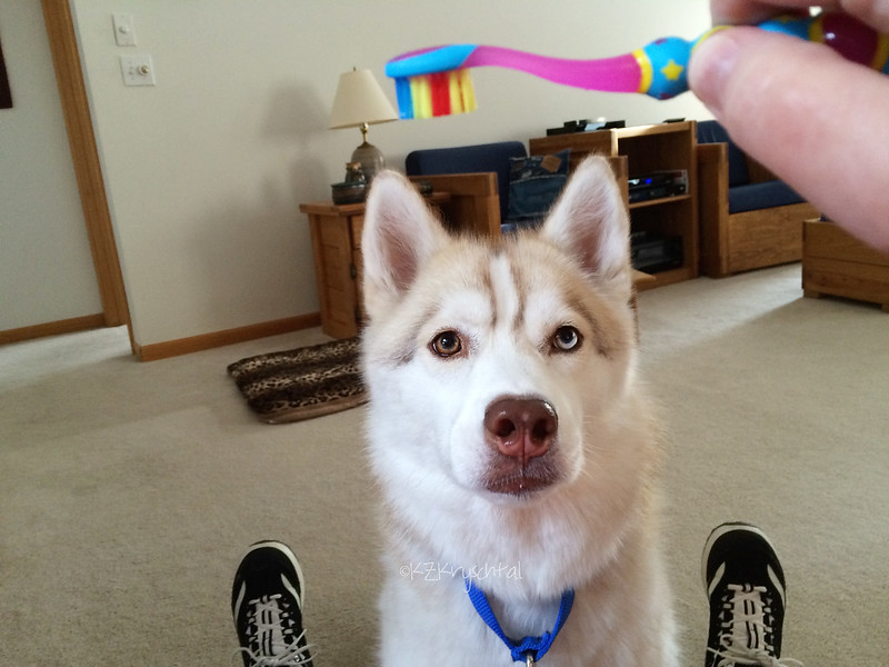 IMG_4793MagsToothbrush