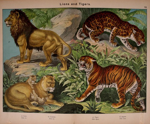 001-Natural history of the animal kingdom for the use of young people..- 1889-William Forsell Kirby