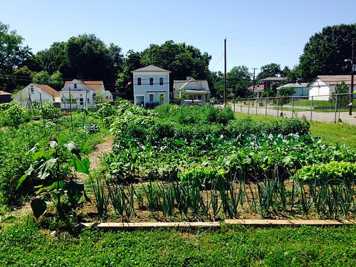 Community gardens like this one in Louisville, KY, bring neighbors together to produce fresh fruits and vegetables in areas that usually have no access to fresh produce. NRCS photo.