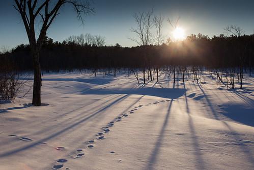 winter snow cold canon harvard animaltracks