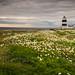 Hook Lighthouse by David. kennedy