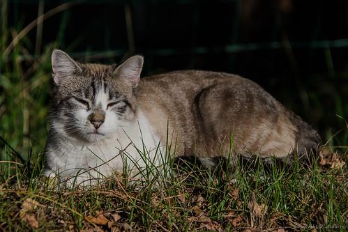 Le chat_7698