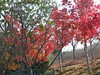 Autumn/Fall colors, Simi Valley