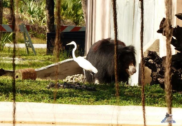 Zoo Miami 14.11.2014 64