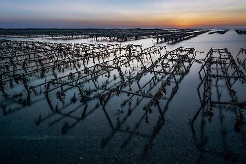longexposure sunset seascape farm sony oyster alpha paysage 77 parc manche huitre cotentin 1650 poselongue blainvillesurmer ostreicole leebigstopper