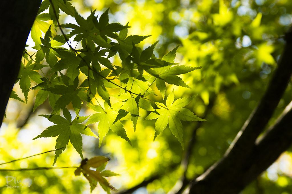 Shirotori Garden-37