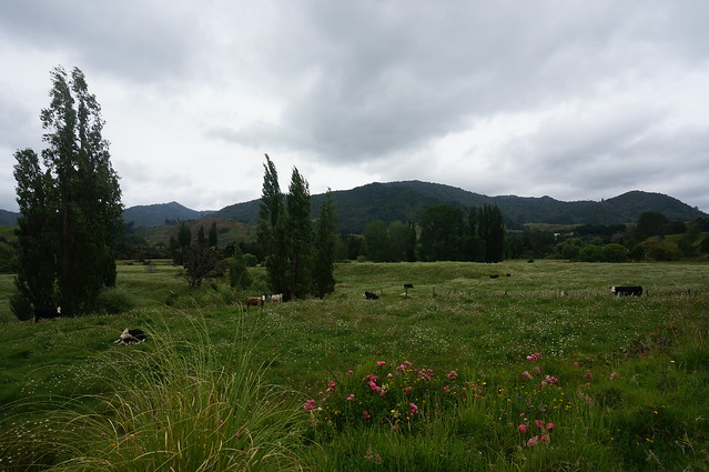 So much green pastureland full of cows and sheep