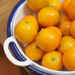 lemon(0.0), tangelo(0.0), clementine(1.0), citrus(1.0), orange(1.0), valencia orange(1.0), meyer lemon(1.0), kumquat(1.0), yuzu(1.0), produce(1.0), fruit(1.0), food(1.0), sweet lemon(1.0), bitter orange(1.0), tangerine(1.0), mandarin orange(1.0),