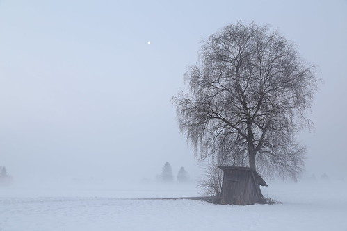 old morning schnee snow cold tree field fog landscape frost shed freezing damp schnitzler