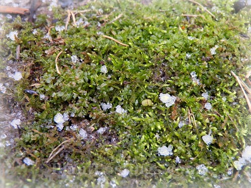 ice and moss