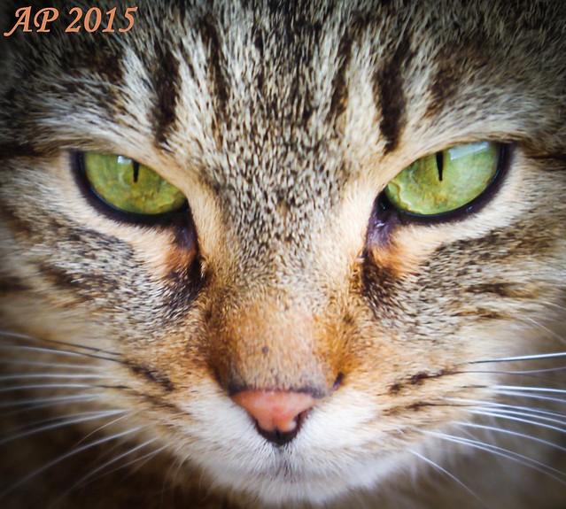 Yeux de chat / Cat's Eyes