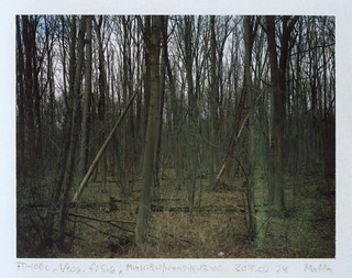 Two leaning trees (FP-100c)