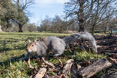 The squirrel that thought I was a tree and climbed up my leg and onto my rucksack today at Kew Gardens