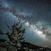 Sony A7RII Astro Photography Milkyway Ancient Bristlecone Pine Forest Dr. Elliot McGucken Fine Art Photography!  Subtle Light Painting! by 45SURF Hero's Odyssey Mythology Landscapes & Godde