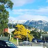 Spectacular contrasts in Hobart this winter