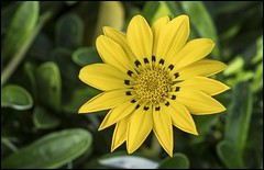 I love yellow flowers-1=