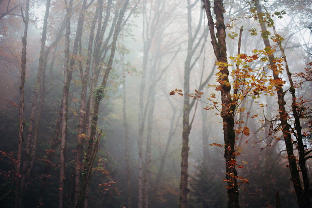 autumn in the woods, Nikon FM2