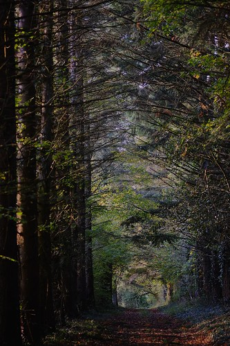 autumn france colors forest automne french colorful couleurs chiaroscuro clairobscur aforest xe1 forêt xpro1 français charmeslagrande xf60 fujixe1