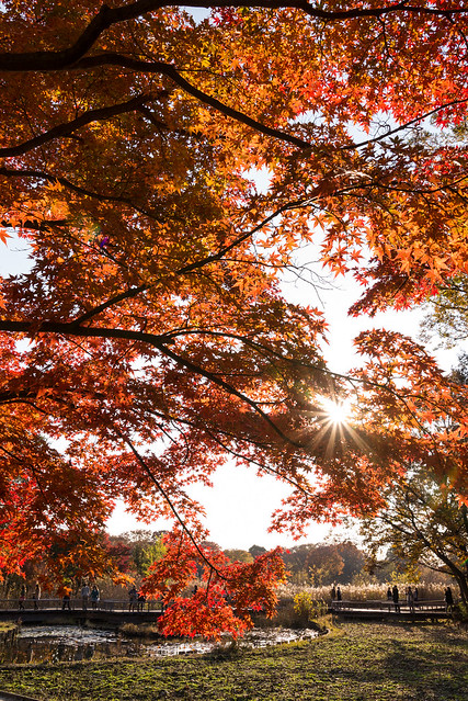 夕暮れの紅葉を撮影