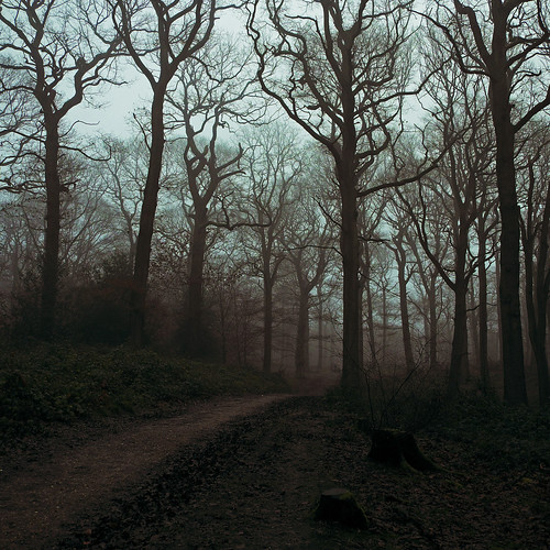 wood trees mist woods fujifilm wgc xpro1 sherrards 18mmf2 gor44