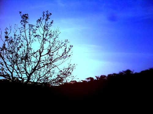 tree nature beauty landscape