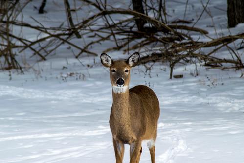 park winter snow ny newyork cold nature landscapes unitedstates mendon upstate ponds honeoyefalls