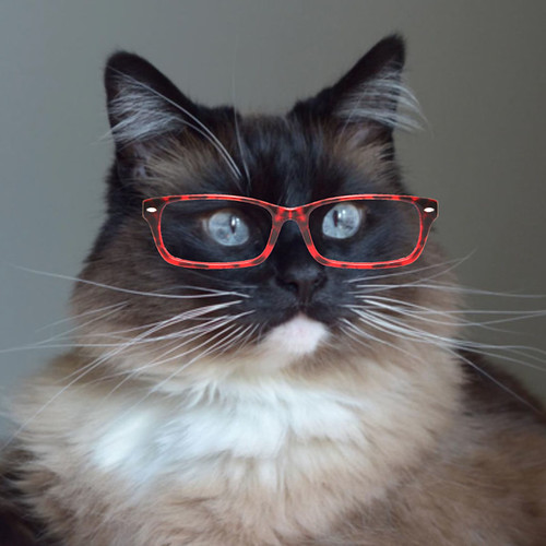 Bean_Glasses_2