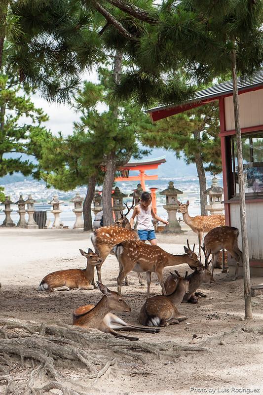 Santuario de Itsukushima-38