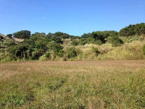 石虎田旁茂密的次生林,提供石虎等淺山物種最好的棲息環境。