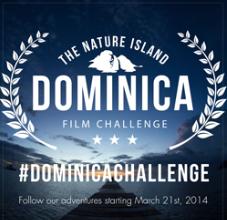 Dom_logo2