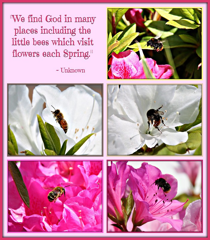 """We find God in may places including the little bees which visit flowers each Spring."""