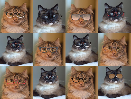 cats_in_glasses