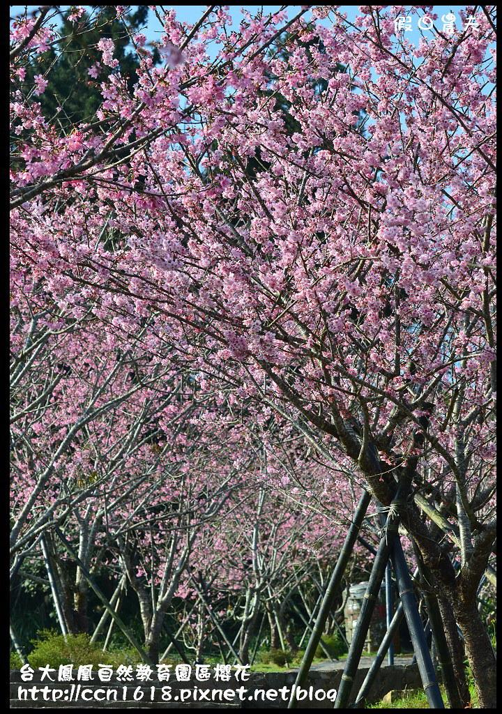 台大鳳凰自然教育園區櫻花DSC_6070